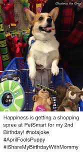 Corgi Birthday Meme - i me charlotte the corgi happiness is getting a shopping spree at