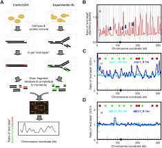 Genome Mapping Replication Stress Induced Chromosome Breakage Is Correlated With