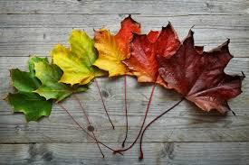 thanksgiving asheville nc make n take autumn thanksgiving wreath u2014 b b barns