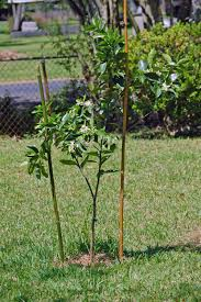 make natural garden stakes using bamboo cage free mom