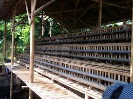 Termometer Kandang Ayam contoh bentuk kandang longyam balong ayam untuk ayam arab petelur