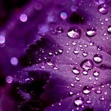 ipad retina hd wallpaper purple leaves ipad ipad air ipad pro