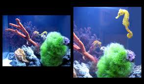 custom aquariums albany ny custom aquariums saratoga ny