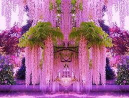 a purple wisteria flower garden in japan u2026