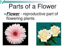 20 female reproductive part of flower milkweed flower