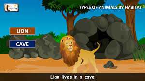 habitat of animals animals video for kid kindergarten learning