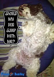 Why Do Dogs Lick The Sofa The Dangers Of Sleeping With Dogs Fidose Of Reality