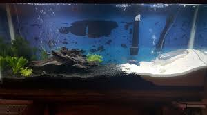 Zombie Aquarium Decorations Under Water Dry Zone For Fiddler Crabs With Pictures