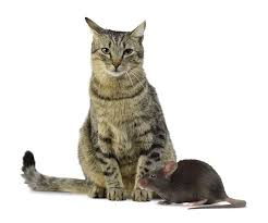 Bed Bugs On Cats Pest Control Nj Exterminators Serving Nj And Parts Of Ny