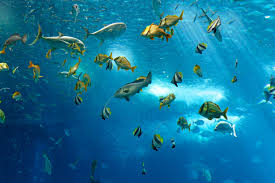 fish underwater sea ocean fish under water sea ocean hd wallpaper