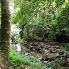 Up Los Banos Botanical Garden Makiling Botanic Gardens Biyaheng Laguna