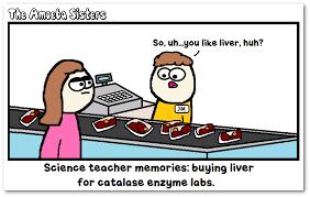Teacher Appreciation Memes - ford focus memes teacher appreciation focus best of the funny meme