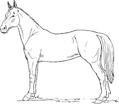 coloring sheets of a horse simple horse coloring pages marijuanafactorfiction org