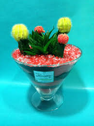 gymnocalysium cactus arrangement in glass with decorative colored