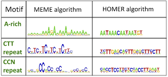 Meme Motif Search - dna crossover motifs associated with epigenetic modifications