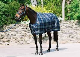 Buccas Rugs 72 Best Horse Rugs Horse Rugs Accessories U2013 Horse Fly Rugs