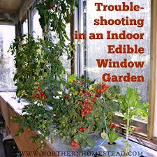 growing an indoor edible garden video northern homestead
