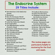 amy brown science human body oh no the endocrine system