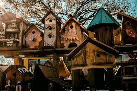 top 10 bird house problems and solutions