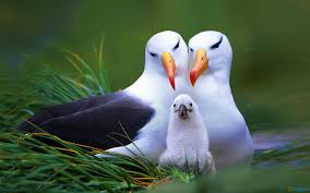 birds images Pack 893pv birds 04 02 15 download for free jpg