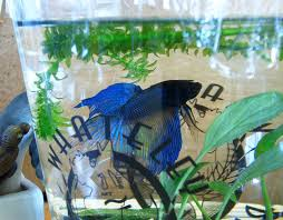 Betta Fish Vase With Bamboo Betta Fish Look At The Bubbles Random Bits Of Projects