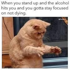 Funny Hangover Memes - hangover memes funny hang over pics