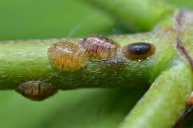 common household garden pests the indoor gardens