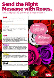 What Do Colors Represent Sending The Right Message With Roses Articles Giant Eagle