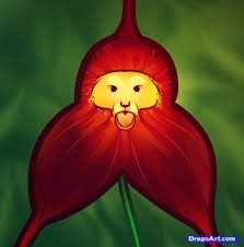 monkey orchid how to draw a monkey orchid step by step flowers pop culture