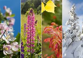 how are annuals and perennials different wonderopolis