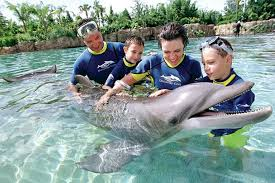 Florida wild swimming images Places to meet dolphins in florida visit florida jpg