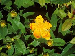 yellow flowers for your garden hgtv