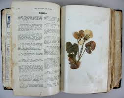Flowers In A Book - things people stick in books parks library preservation