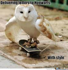 Owl Memes - owl by mitelos meme center