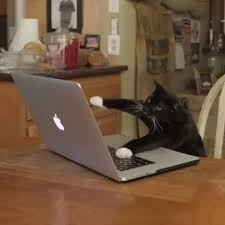 Laptop Meme - cat laptop gif find share on giphy