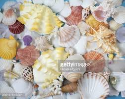 assorted seashells assorted seashells on blue background stock photo getty images
