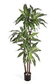 plantes d駱olluantes chambre plante dépolluante d intérieur conseils prix et recommandations