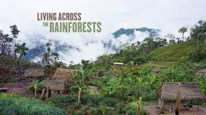 living across the rainforests by pamela cabrera u2014 kickstarter