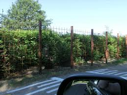 jago raumteiler und kauf design paravent natur raumteiler weidenholz e von