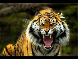breakbeat retro rocky eye of the tiger dj kilian remix