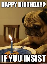 Happy Birthday Pug Meme - happy birthday if you insist sad birthday pug quickmeme
