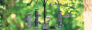 Backyard Wild Birds Wild Birds Unlimited Why Feeding Birds In The Fall Can Be Helpful