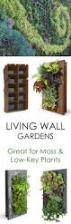 Wall Mount Planter by Best 25 Wall Planters Ideas On Pinterest Natural Framed Art