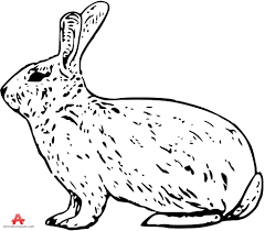 rabbit outline clipart drawing free clipart design download