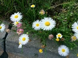 native arkansas plants our favorite plants eco landscaping