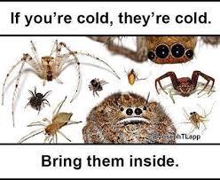 Spider Meme Misunderstood Spider Meme - do as you will but bring me inside misunderstood spider know
