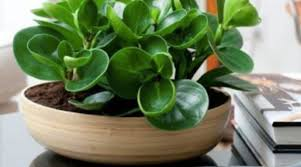 nasa identified the best air purifying plants to treat