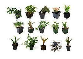 house plants ebay