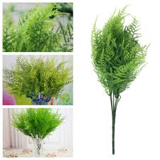 Plant Home Decor by Compare Prices On Asparagus Fern Plants Online Shopping Buy Low