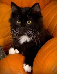 halloween kitty sand cats are beautiful 4th march 2015